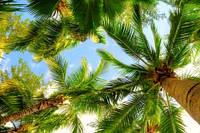 """Фотообои """"Пальмы и небо"""", Фактурная текстура (холст, иней, декоративная штукатурка)"""