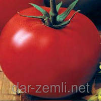 Семена томата Джина ( плоды плотные и очень вкусные)