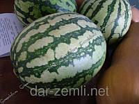 Семена арбуза Фатон ( весовые оптом от производителя)