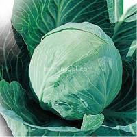Семена капусты Завадовская