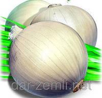 Семена лука Билянка белый (оптом от производителя)