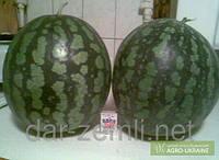 Семена арбуза Холодок ( от производителя)