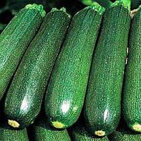 Купить семена кабачка Аэронафт (оптом от производителя)