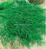 Семена укропа Грибовский ( от производителя )