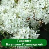 Гидролат Багульник Гренландский, 1 литр