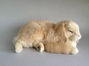 Висловухий кролик Perfect Petzzz