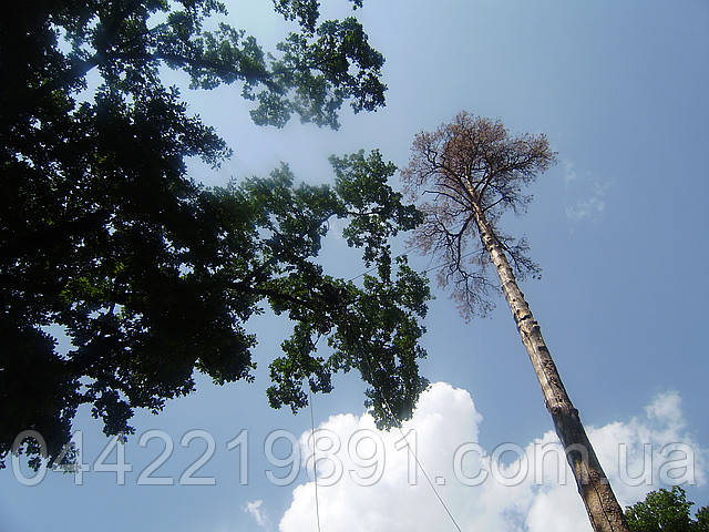 Видалення дерев (067) 232 77 81
