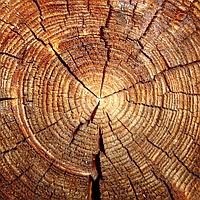 """Подушка """"Спил дерева"""""""
