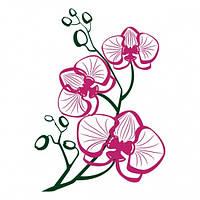 Виниловая Наклейка Orchid