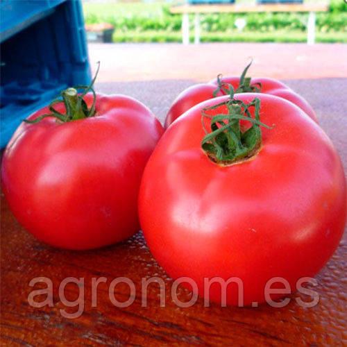Семена томат Афен F1 250 семян Clause Seeds