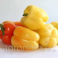 Насіння переца Мадонна F1 1000 насінин Clause Seeds