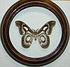 Сувенир - Бабочка в рамке Epiphora bauhiniae m. Оригинальный и неповторимый подарок!
