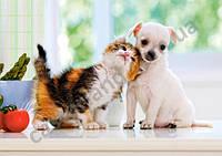 Пазлы Castorland  500шт (51687) 47*33 см (Котенок и щенок)