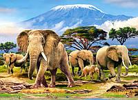 Пазлы Castorland  300шт (030019) 40*29 Утро в Килиманджаро