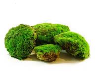 Мох кочковой (зеленый)