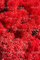 Мох Ягель Красный Коробка с окном 500 гр