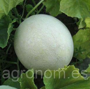 Семена дыни МИРА F1 100 семян (KS 7037) Kitano