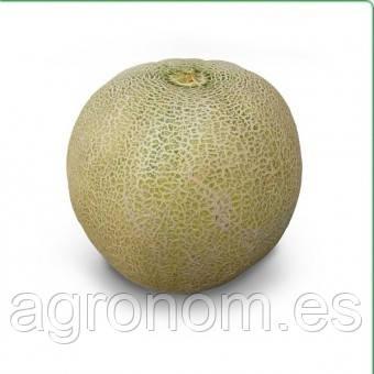 Семена дыни KS 55 F1 100 семян Kitano Seeds