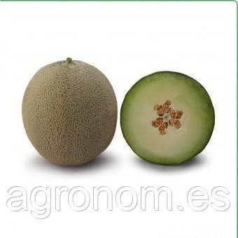 Семена дыни KS 7044 F1 1000 семян Kitano Seeds