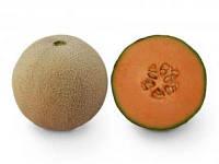 Семена дыни KS 7049 F1 1000 семян Kitano Seeds