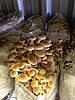 Технологія вирощування екзотичних грибів