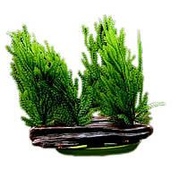 Растение искусственное Hagen Marina Willow Moss (Яванский мох)