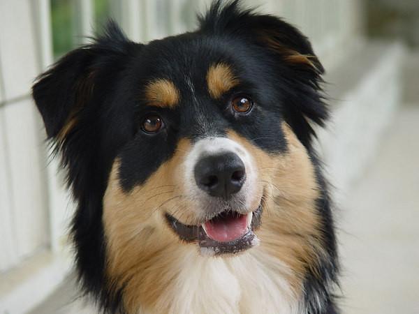 Лечебный корм для собак Royal Canin Skin Support Dog - кожа