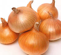 Семена лука Луганский (оптом на вес)