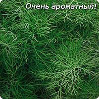 Весовые семена укропа Симфония  в Одессе
