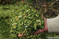 Семена кукурузы  Силос (3-4 фр)