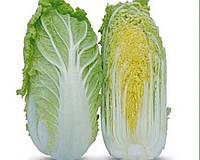 Семена пекинской капусты KS 399 F1 1000 семян Kitano Seeds