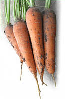 Семена моркови Мацури (KS 7) F1 10 000 сем. Kitano Seeds
