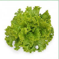Семена салата KC 129 F1 5 гр. Kitano Seeds