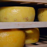Сыр авторский КАЧОТТА (на развес)