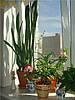 Как Low-E стекло (и-стекло) влияет на растения