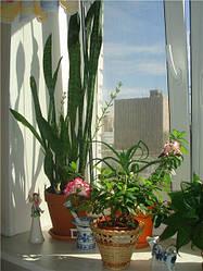 Як Low-E скло (і-скло) впливає на рослини