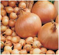 Семена лука- севок (тыканка, арбажика) Штутгарт