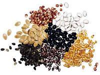 Количество семян в 1 гр