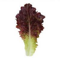 Семена салата KC 160 F1 5 гр. Kitano Seeds