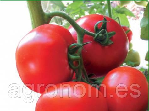 Насіння томату Ядвіга F1 1000 насінин Kitano Seeds