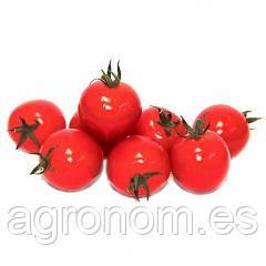 Семена томата детерминантный КОНОРИ  F1 1000 семян Kitano Seeds