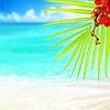 """Фотообои """"Цветущая ветка на пляже"""""""