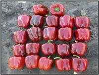 Насіння перцю солодкого Карисма F1 5000 насіння Clause Seeds