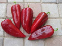 Насіння перцю солодкого КАПЕЛО F1 500 насінин Clause Seeds