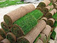 Рулонный газон цена