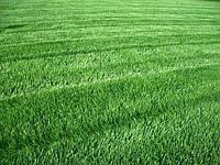 Рулонный газон Днепропетровск