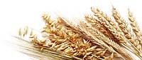 «Пророщенные зерна», применение