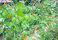 Сетка садовая пластиковая (заборная ПВХ)  18х20 мм 1,6м*20м