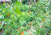 Сетка садовая пластиковая (заборная ПВХ)  28х25 мм 1,6м*20м