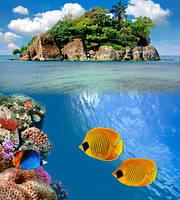 "Фотообои ""Желтые рыбки"", Фактурная текстура (холст, иней, декоративная штукатурка)"